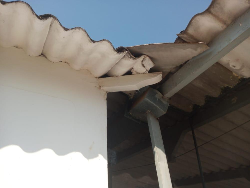 Controle De Morcegos – Dedetizadora Imuni Control (16)